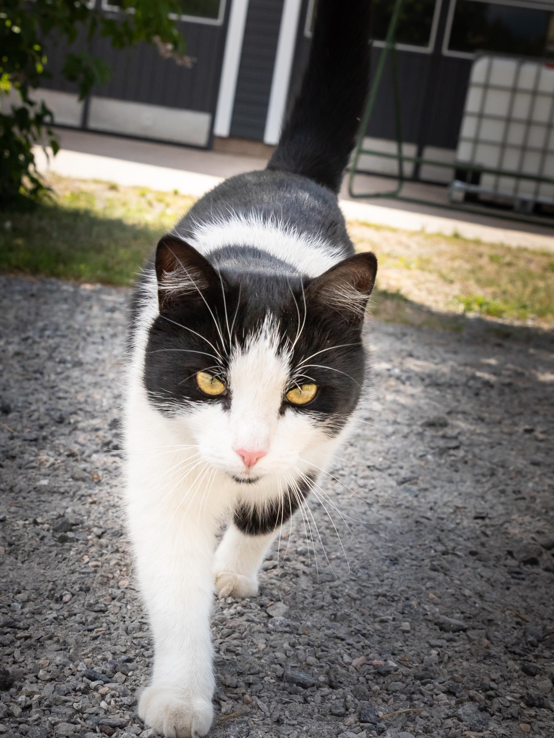 Pikkutalossa on koti neljälle asiakkaalle ja Hessu-kissalle.